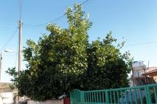 2013_zypern_108