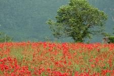 2008_italien_114