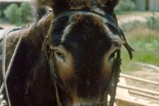 1989_korsika_082